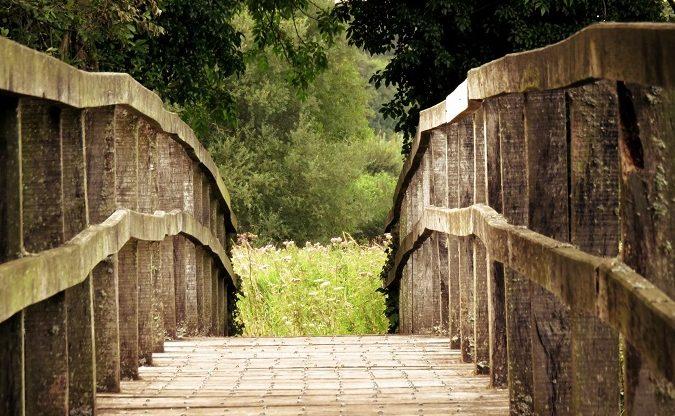 wooden bridge on path in woods