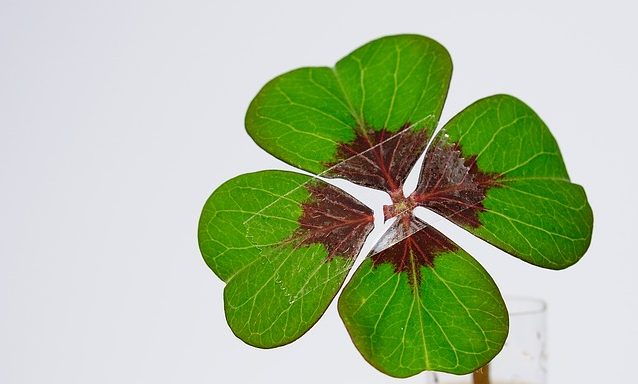 four leaf clover in glass of water